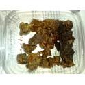 Natural forest propolis - Manuka